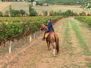 COMPLET - GAILLAC - Route des vins